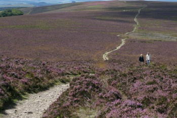 Best Exmoor Walks, Lynmouth, Exmoor National Park
